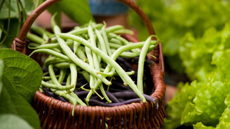 L'ingrediente del mese di maggio: i fagiolini